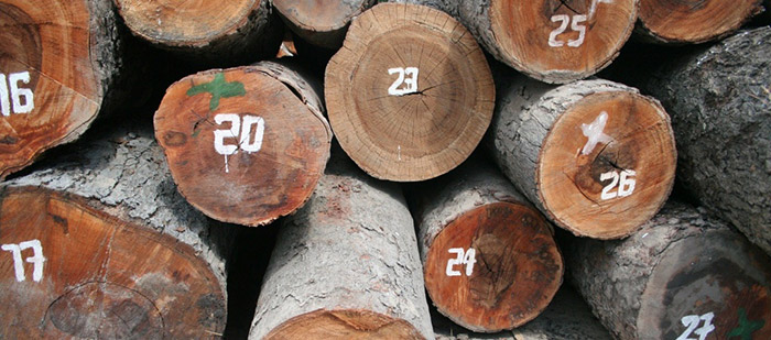 Mozambique introduces new regulations to stop export of unprocessed wood