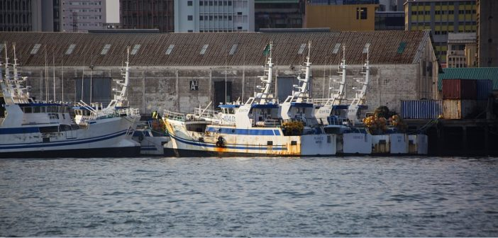 EMATUM's fishing boats in Maputo harbour. Photo © Timothy Haccius / Zitamar News