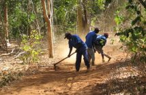 Workers on the TCT forestry concession in Sofala