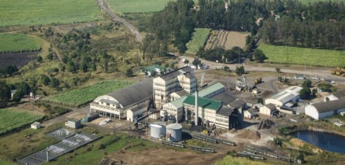 Illovo Sugar's Maragra plantation in Maputo province. Photo © Illovo Sugar