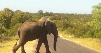 Elephant crossing the road in Kruger Park, South Africa.  Photo © Eva Sofie Fritzbøger/Zitamar News