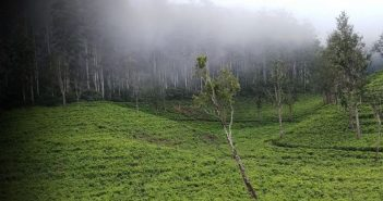 Asian Tea Group's Cha de Magoma plantation in Gurue, Zambezia. Photo: Asian Tea Group