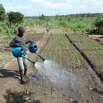 Mozambique takes first steps to stem dangerous use of pesticides