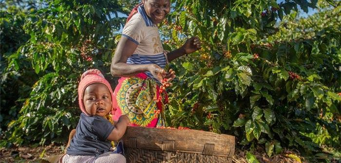 Coffee farmers in Gorongosa © Gorongosa Coffee